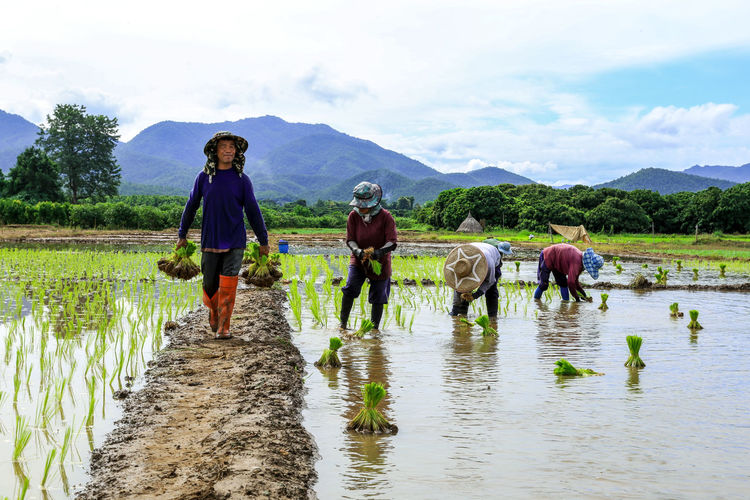 Men working on agricultural field against sky