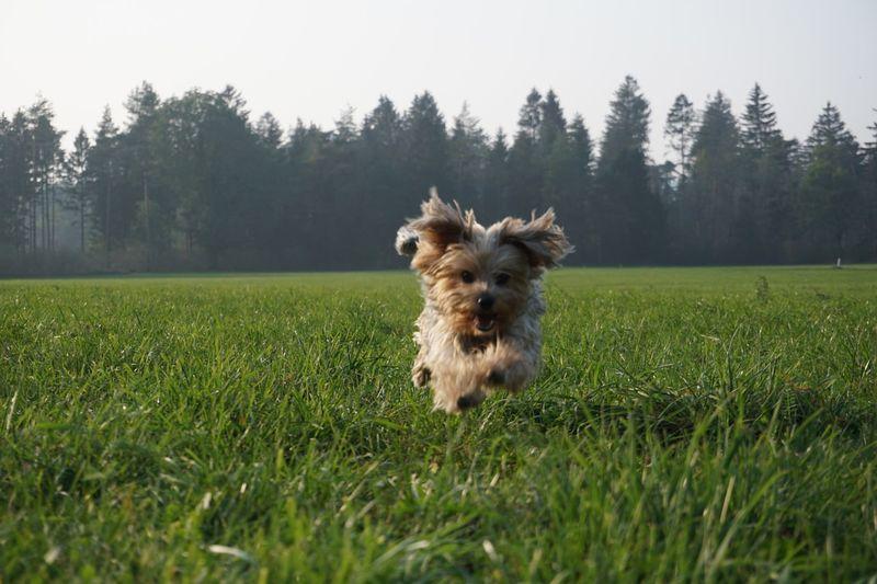 Flying Dog xD