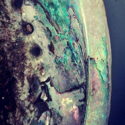 Paua Kaimoana Abalone Seashell Aotearoa NZ Newzealand Pauashell 9vaga_letterp9 Shell 9vaga_letters9