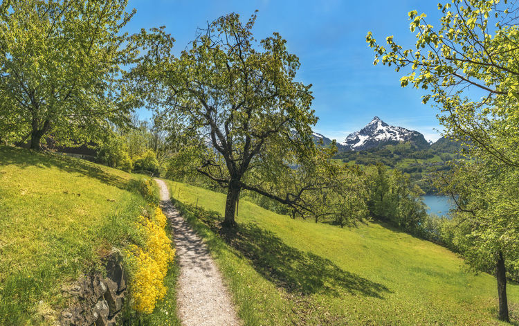 Spring scenery with a hiking trail through an orchard, near the Walensee lake, in the Swiss Alps mountains, on a sunny day, in Quarten, Switzerland. Meadow Flowers Field Grass Green Color Landscape Meadow Mountain Mountain Range Nature No People Orchard Outdoors Springtime Summer Swiss Alps Swiss Nature Switzerland Tranquil Scene
