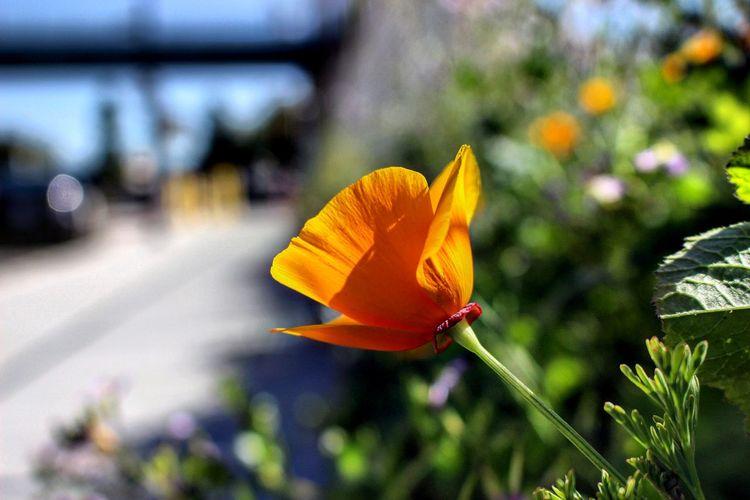 EyeEm Masterclass Eyem Best Shot - My World Goldenstate Flower Hello World Streetphotography San Ramon Ca Lifeisbeautiful Natural Beauty Nature_collection