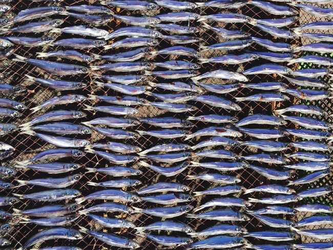 Backgrounds Pattern Close-up No People Outdoors Day Abstract Water Nature Beauty In Nature Scenics Animal Themes Dried Fish  Japanese Food Seafoods Fish Market Japanese Style Life By The Sea
