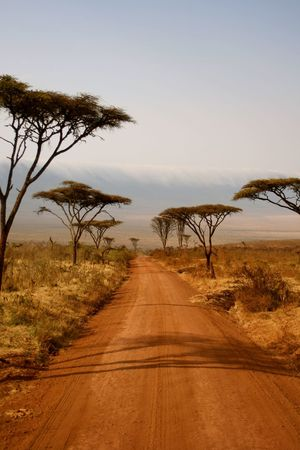 The end of the road... Nature Tree Landscape The Way Forward Scenics Sand Dune Sunset Idyllic Clear Sky Beauty In Nature Tranquility Sky Outdoors No People Day Desert Single Tree Water Ngorongoro Crater Tanzania Africa Photography Landscape_photography Boab Tree Wildlife & Nature