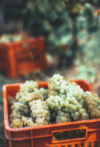 Close-up of grape in basket at market