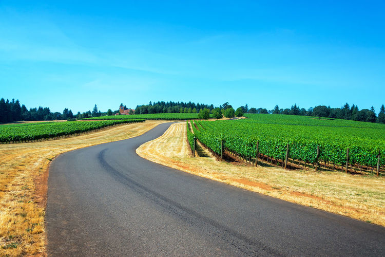 Road passing through a vineyard in the Dundee Hills in Oregon Background Countryside Dayton Dundee Farming Grape Grapes Green Hills Industry Landscape McMinnville McMinnville, Oregon Nature Oregon Outdoors Pinot Noir Road Sunny USA Vines Vineyard Willamette Valley Wine Winery
