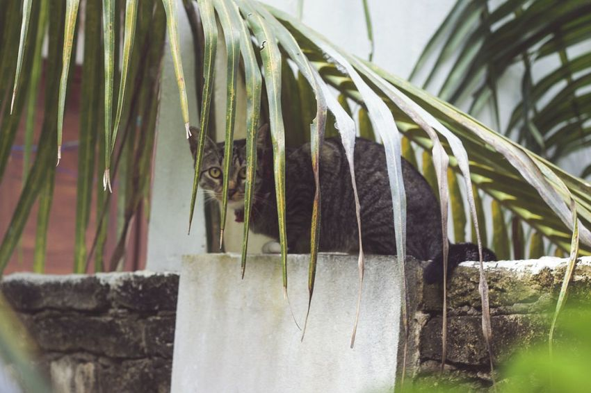 Cat Palm Tree Nature Hiding