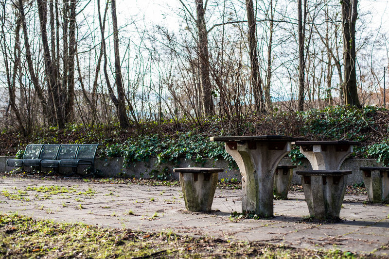 Abandoned Absence Autumn Bare Tree Bench Broken Destruction Dirty Empty Footpath Grass Obsolete Outdoors Park Park - Man Made Space Park Bench Tree Tree Trunk Wood Wooden