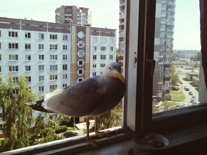 Unexpected guest Summer In City Nature Invades City Unexpected Guest Block Flats Seagull Soviet Architecture Building Exterior Urban Nature Bird City Apartment Window Sky Architecture Built Structure