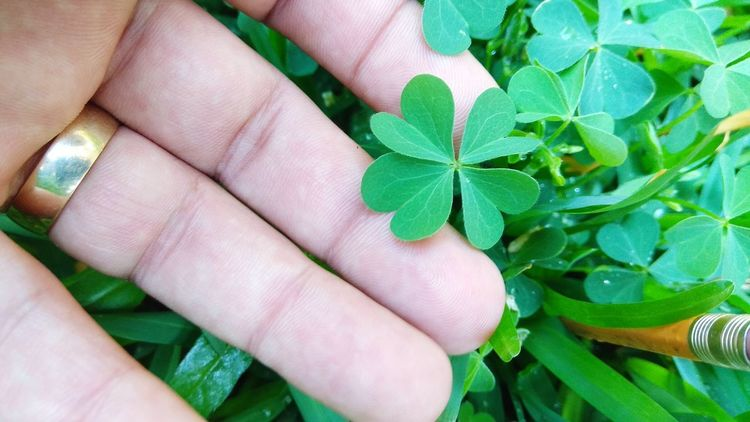 trébol de 4 hojas 🍀 Trebol🍀 Trebol Luck Lucky Lucky 😍 Lucky 🍀lucky Day 🍀 😚 Human Hand Fingernail Nail Polish Leaf Women Beauty Human Finger Close-up Green Color Plant