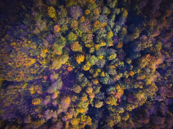 Perspectives On Nature Drone  Dronephotography Air Vertical Forest Trees Fall Fall Beauty Fall Colors Golden Sunlight Season  Countryside Dji No People Indiansummer Fromabove Pattern Nature Beautiful Beauty In Nature Flying High Winteriscoming Wide Angle