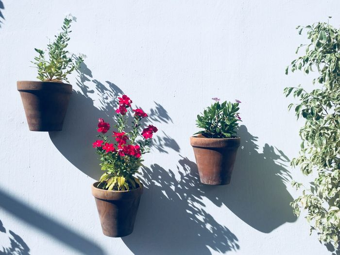 Plant Potted Plant Growth Nature Flower Flowering Plant Flower Pot Plant Potted Plant Growth Nature Flower Flowering Plant Flower Pot No People Freshness Wall - Building Feature Shadow Outdoors Sunlight Day Fragility Vulnerability  Flower Head