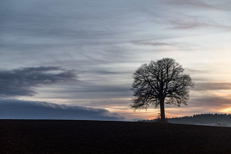 Cloud - Sky Sky Tree Scenics - Nature Beauty In Nature Tranquility Tranquil Scene Bare Tree Plant Land Environment Non-urban Scene Sunset Landscape No People Field Nature Silhouette Remote Idyllic Outdoors Isolated