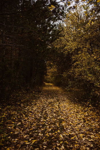 Sunlight falling on autumn leaves on road in forest