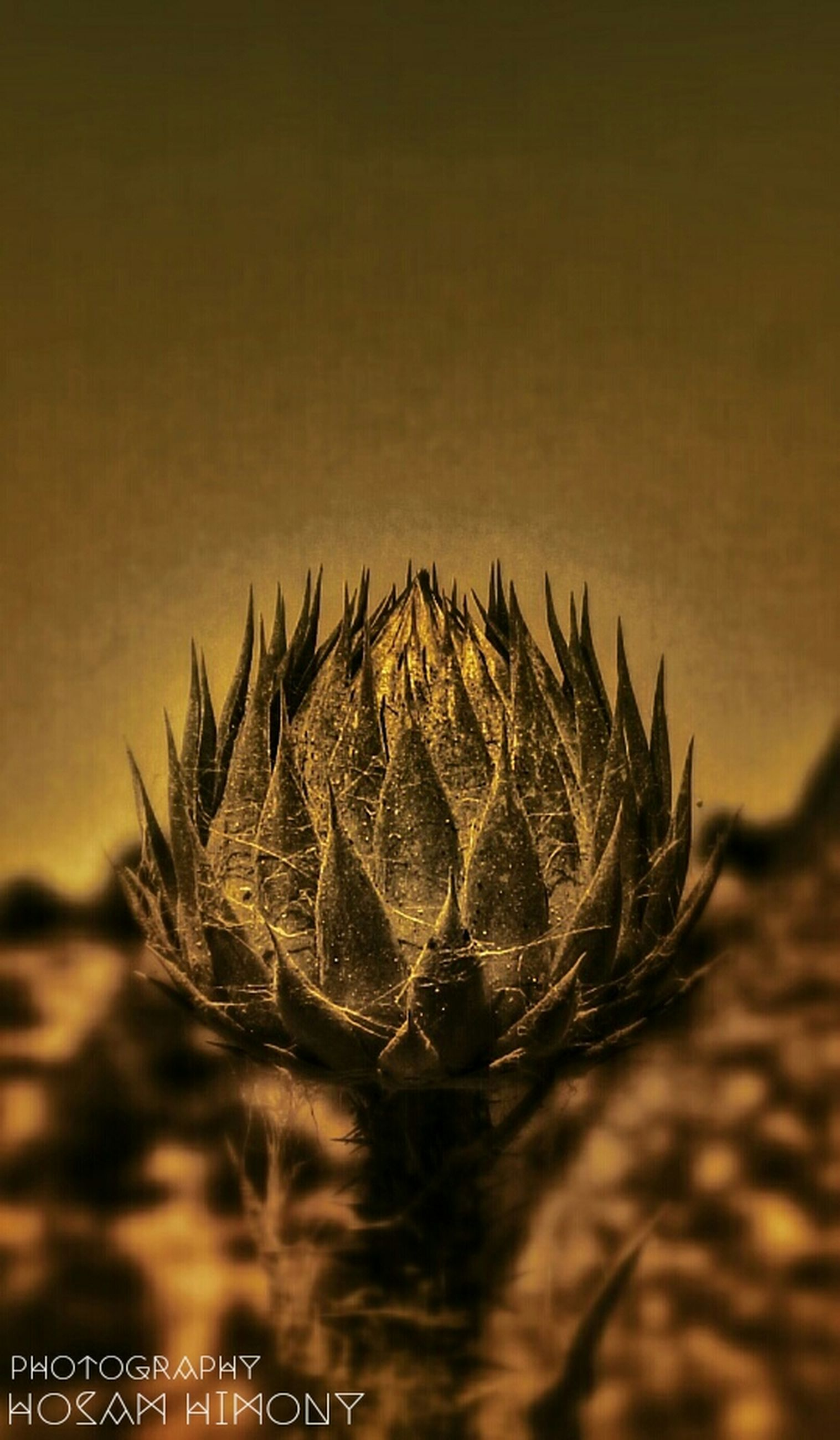 nature, close-up, clear sky, focus on foreground, outdoors, beauty in nature, no people, tranquility, sky, plant, growth, copy space, night, dusk, sunset, tranquil scene, pattern, illuminated, selective focus, cactus