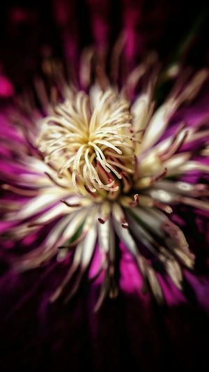 Flower Passion Macro Macro Beauty Kwiat Garden Ogrodek Pasja