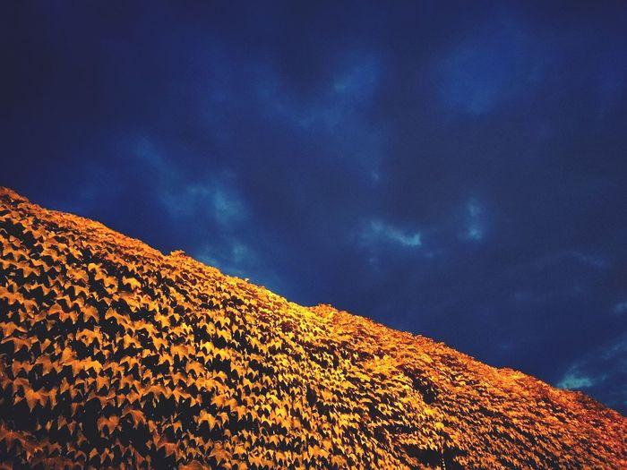 Under an incumbent sky Ivy Covered Ivy Wall EyeEm Selects Astronomy Galaxy Sunset Sky Storm Cloud Storm Atmospheric Mood Dramatic Sky Cumulonimbus