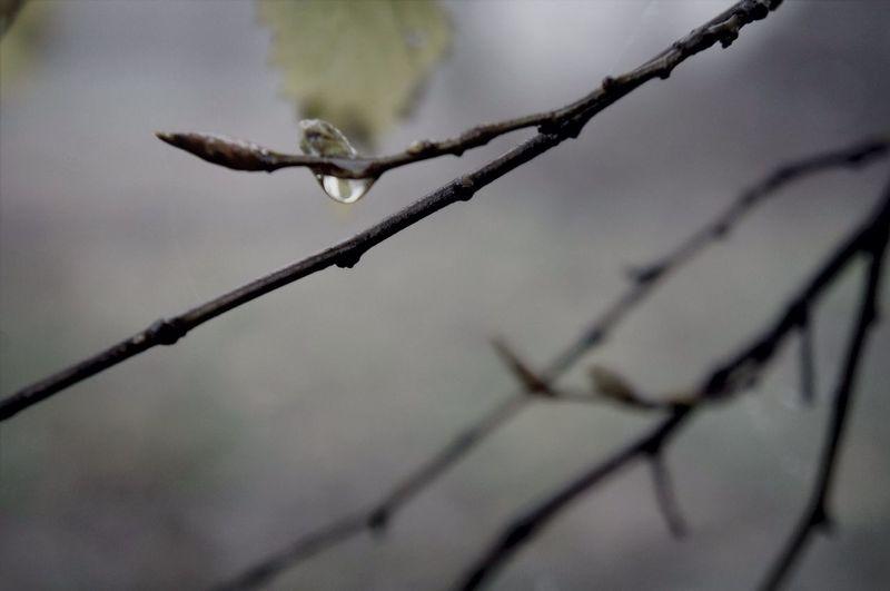 Raindrops Rain Nature_collection Macro