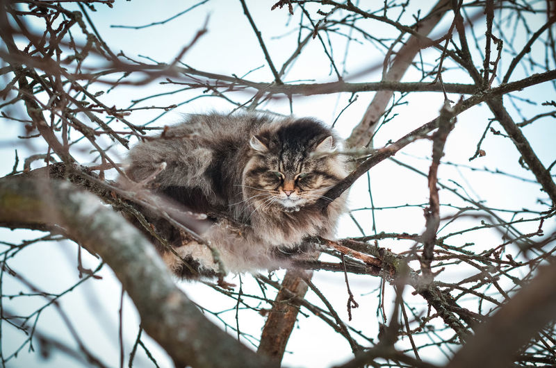 Cat One Animal Mammal Domestic Feline Pets Domestic Animals Whisker No People Homeless Cats Homeless Big Cat Nikon Nikon5100D 50mm 50mm 1.4 Yellow Eyes Yellow Eyed Cat Striped Caterpillar Tiger Cat's Eyes Looking At Camera Cat On The Tree
