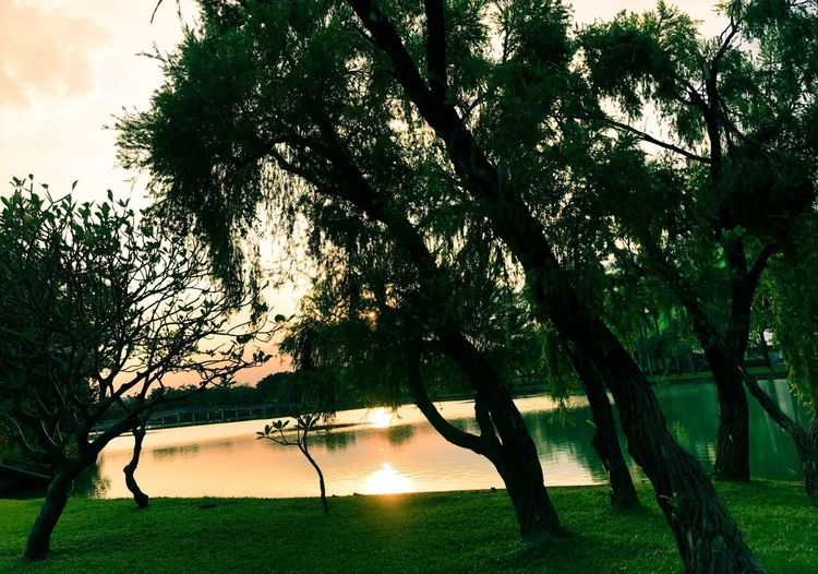 Tree Plant Growth Nature Tranquility Sky Water Outdoors Sunlight Silhouette Tree Trunk Scenics - Nature Sunset No People Beauty In Nature Tranquil Scene Branch Lake Trunk
