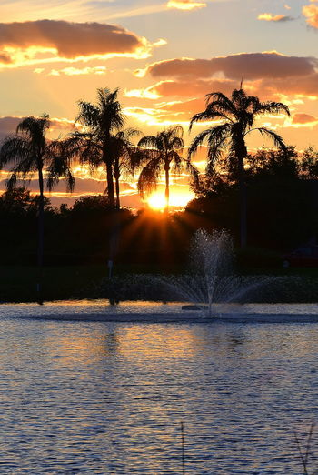 Sunset in Venice Florida Beauty In Nature Fountain Outdoors Palm Tree Palm Tree Silhouette Palm Trees Scenics Silhouette Sky Sun Sunset Sunset Silhouettes Tree Water Water Fountain Venice Florida Vacations Vacation Time