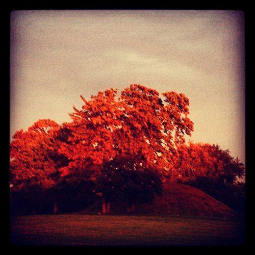 Ig_sweden_autumn2013