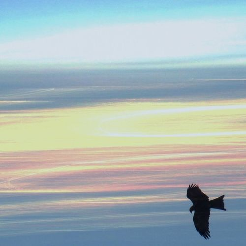 Birdofprey Birdsofprey Raptor Hawk Hawks Falcon Falcons Eagle Eagles Animalsofinstagram Nature Natura Instanature Owl Owls Falconry Hawking Bird Birds Wildlife Animal Animals Wild