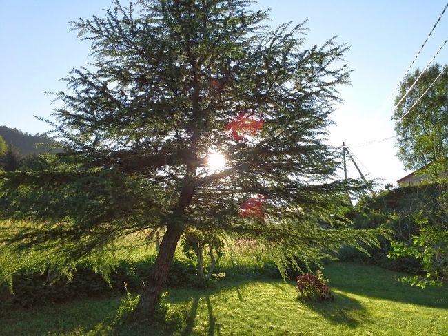 Eide På Nordmøre Silnesmyra Norway Tree