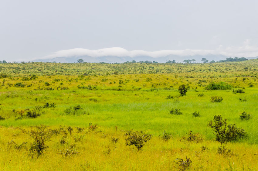 Congo Congo Brazzaville Congolese Africa Landscape