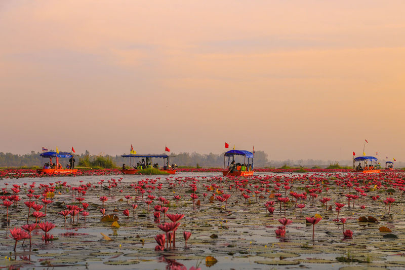 Annual Event Beauty In Nature Day Flower Lotus Lotus Flower Nature Outdoors Red Lotus Sky