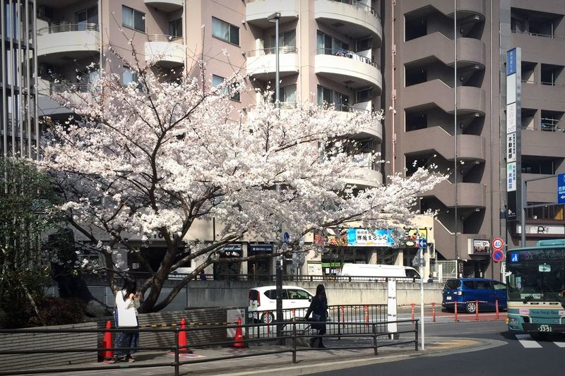 #sakura #flower Building Exterior Architecture Built Structure Tree City Outdoors Day