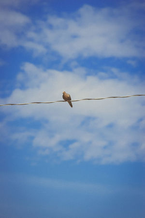 Beauty In Nature Bird Bird On A Wire Blue Sky Clouds Clouds And Sky Cloudy Sky Low Angle View Nature Pigeon Power Line  Sky