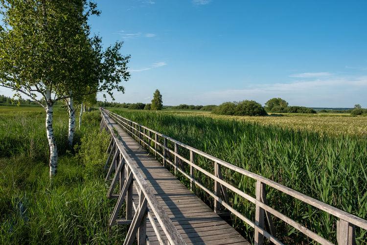 Wooden bridge on swamp against sky