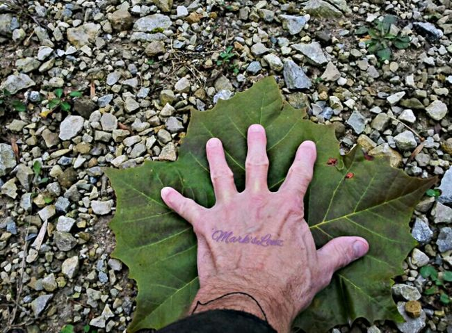 Giant Leaf Green Taking Photos Fotodroiding Andrography Hand Droidography Fotodroids Android Phoneography Andrographer Phoneographer Photodroids Droidographer Nature