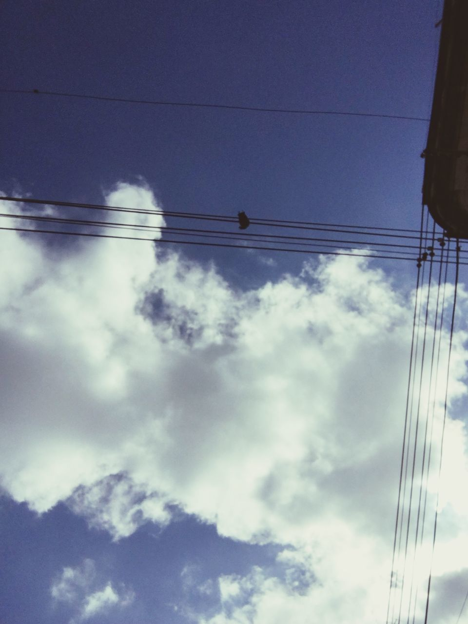 power line, low angle view, electricity, cable, power supply, sky, electricity pylon, connection, cloud - sky, blue, technology, power cable, fuel and power generation, cloud, cloudy, outdoors, no people, nature, silhouette, day