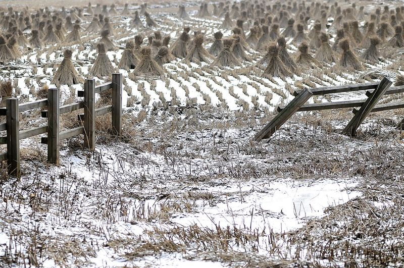 Snow on field