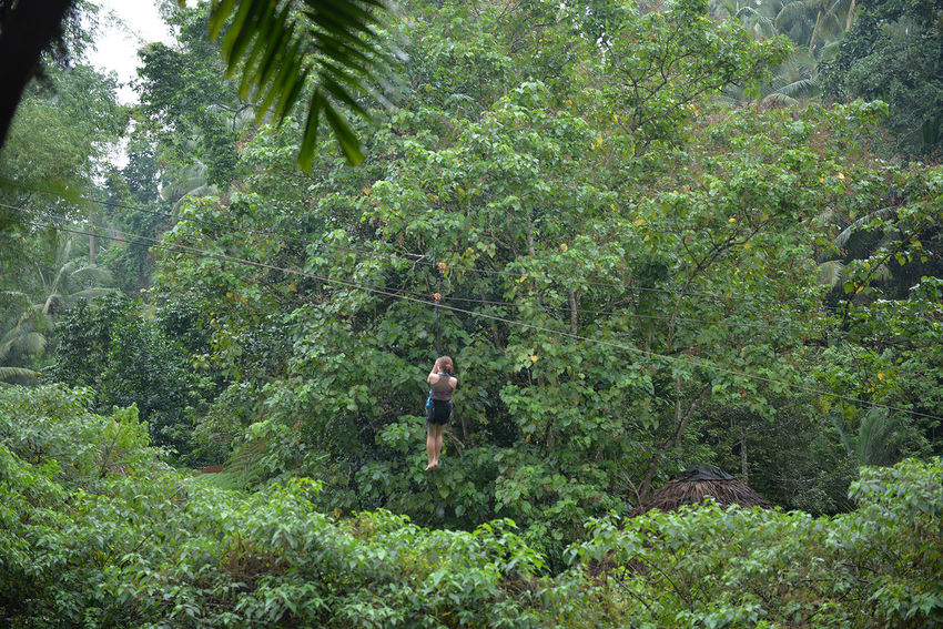 Adult Beauty In Nature Day Dumaguete Eyeem Philippines Forest Forest Camp Full Length Green Color Growth Nature One Person Outdoors People Real People Tree Zipline Ziplining
