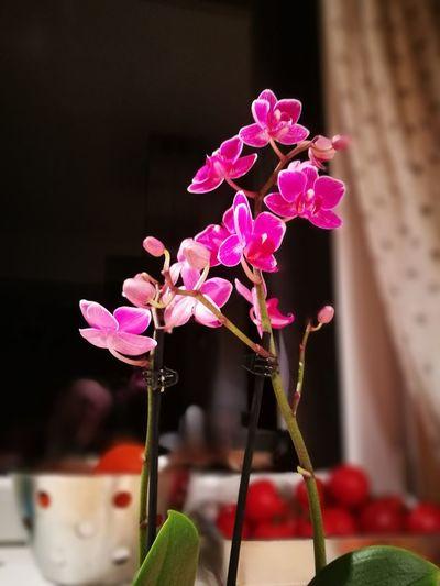 Flower Flower Power Orchid Petal Flower Photography Emotion Naturelover❤