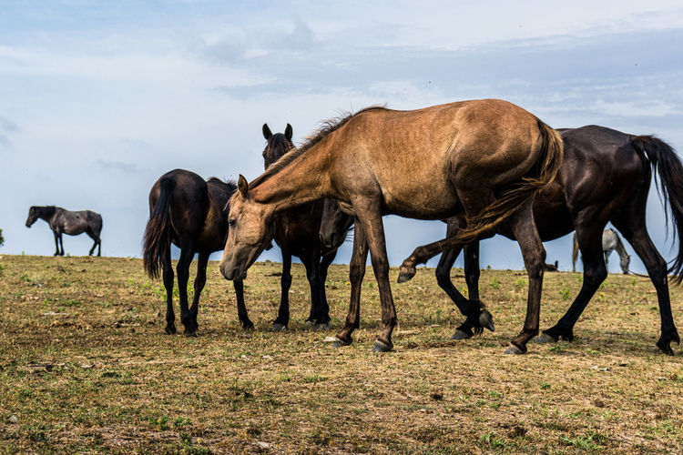 Horses on a field