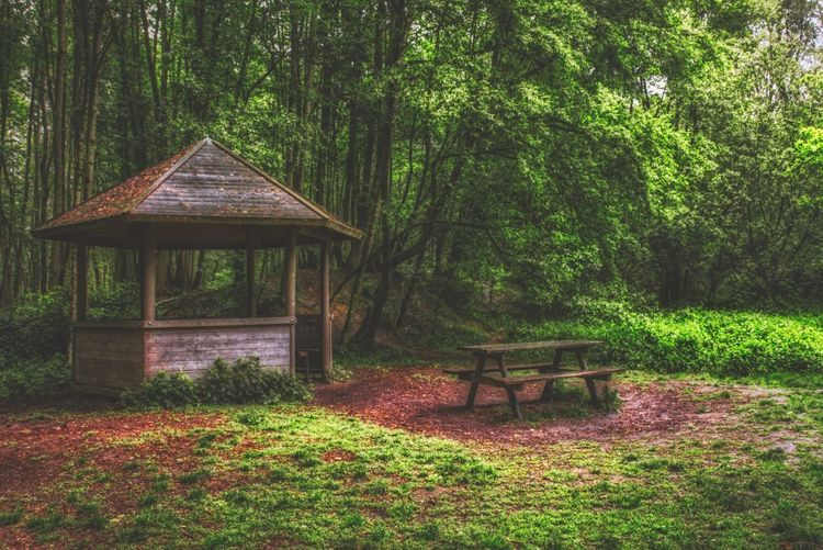 Empty bench by trees in forest