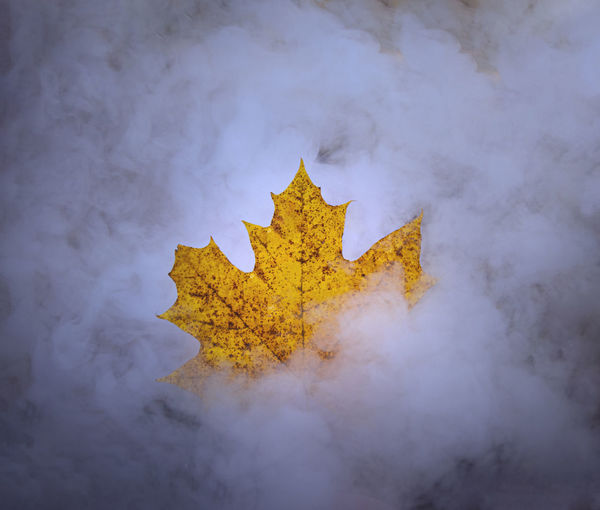 Close-up of yellow maple leaf on metal against sky
