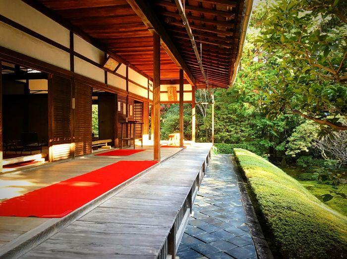桂春院 妙心寺塔頭 Kyoto,japan Kyoto Autmn Colors Autmn Travel Destinations Window Day No People Indoors  Tree Nature