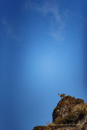 Low angle view of bird on rock against blue sky