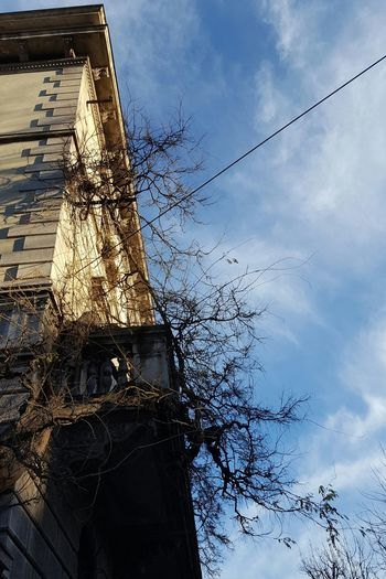 Sky Sunlight Tree Cloud - Sky No People Outdoors Nature Day Beauty In Nature Urban Exploration Urban Nature Winter City Street Old Buildings Building Exterior