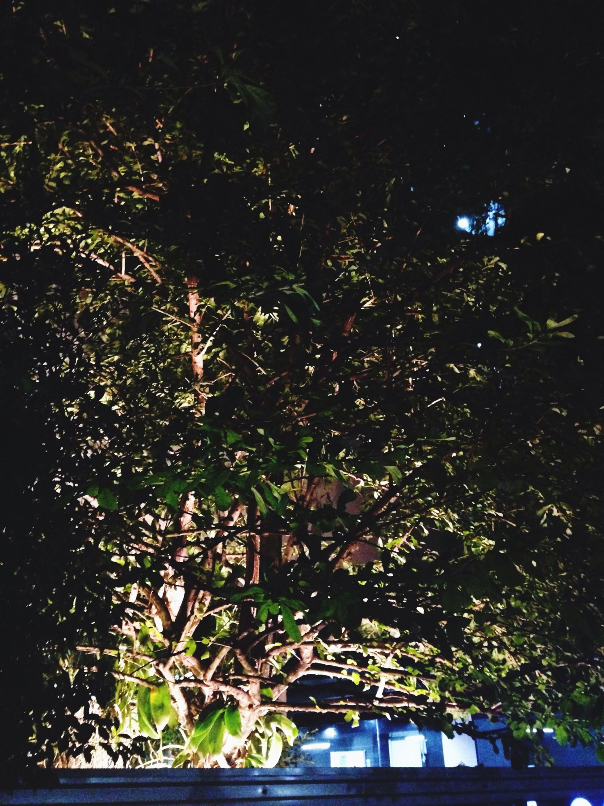 tree, night, low angle view, growth, branch, built structure, illuminated, architecture, building exterior, nature, outdoors, no people, street light, leaf, sky, clear sky, plant, lighting equipment, city, sunlight