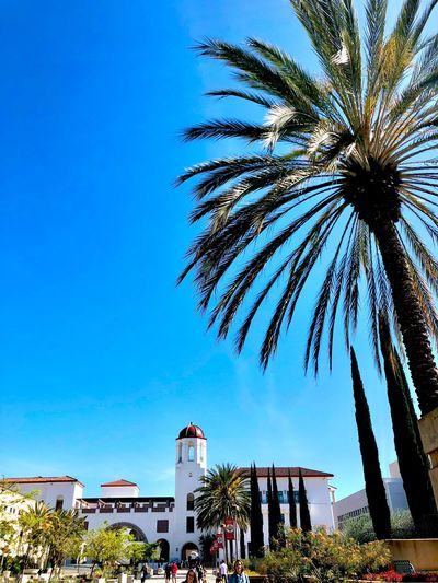 Campus Life Campus University Sdsu Tree Sky Plant Nature Low Angle View Growth Day Blue Arts Culture And Entertainment Built Structure Architecture