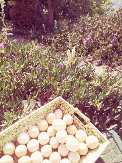 Egg No People Day Large Group Of Objects Outdoors Food Freshness Healthy Eating Grass Chicken Eggs Low Angle View Sky Nature Green Color