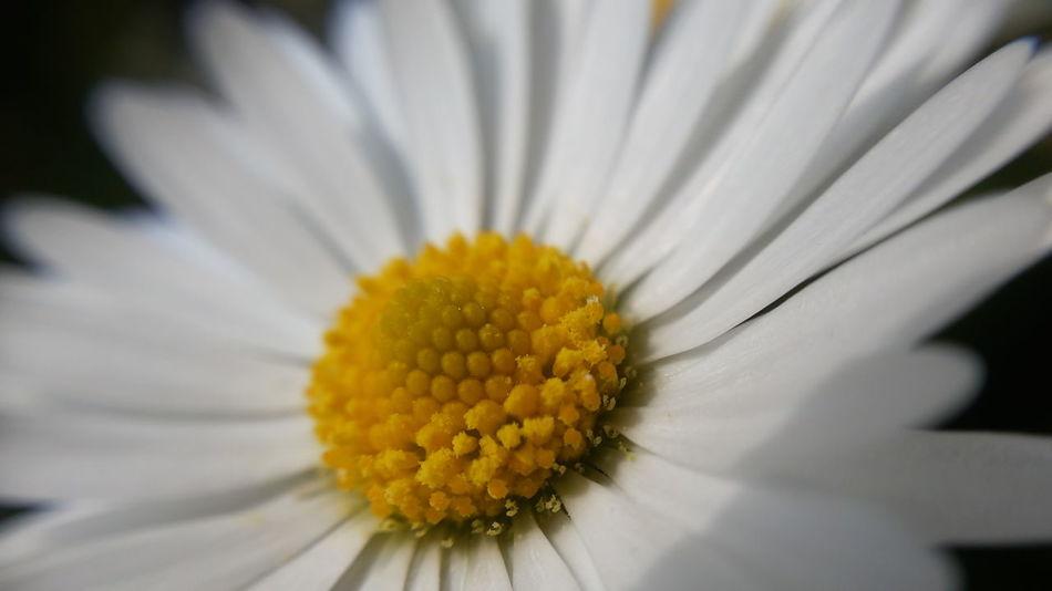 Macro Insects Macro_collection Macro Photography Macro Beauty Macro Macro_art