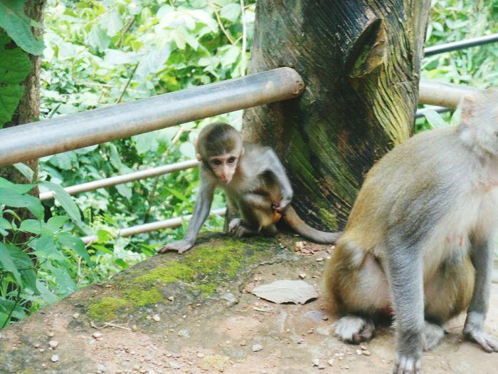 A Cute Monkey Animal Trees