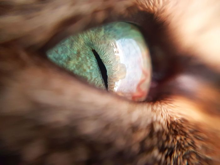 Cropped Image Of Cat Eye