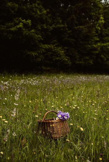 Blue flowers in basket on field